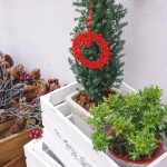 柊(ひいらぎ)とミニツリーの鉢