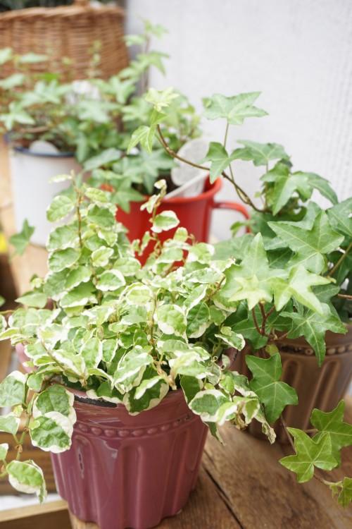 13観葉植物